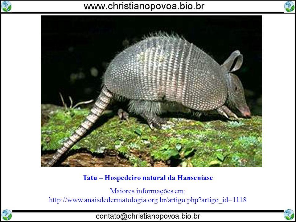 Tatu – Hospedeiro natural da Hanseníase Maiores informações em: http://www.anaisdedermatologia.org.br/artigo.php?artigo_id=1118