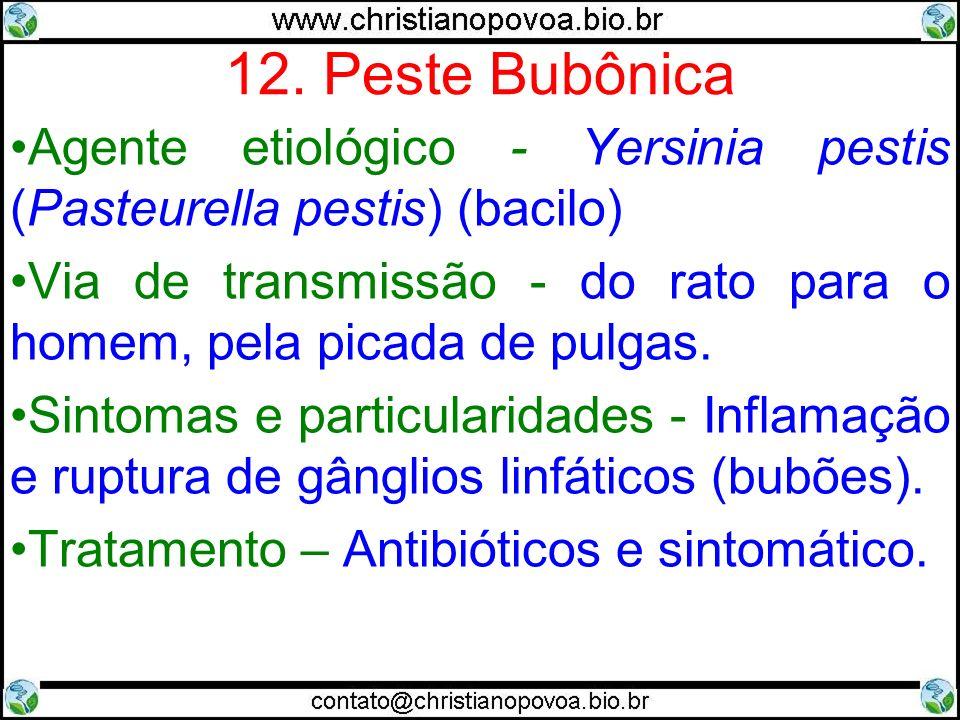 12. Peste Bubônica Agente etiológico - Yersinia pestis (Pasteurella pestis) (bacilo) Via de transmissão - do rato para o homem, pela picada de pulgas.