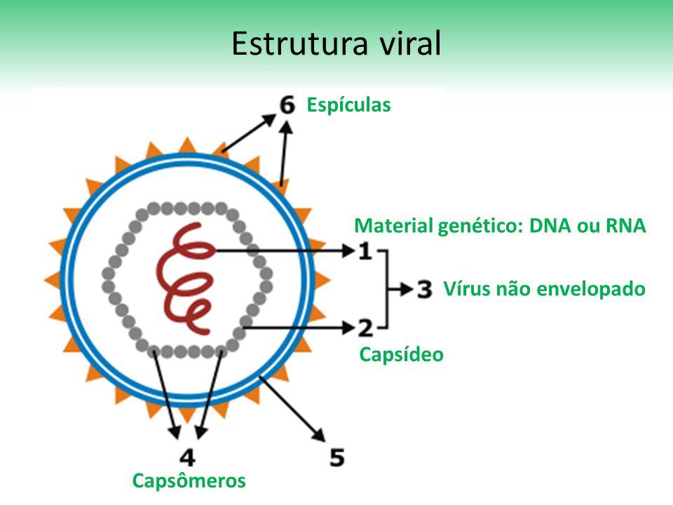 Estrutura viral Vírus não envelopado Material genético: DNA ou RNA Capsídeo Capsômeros Espículas