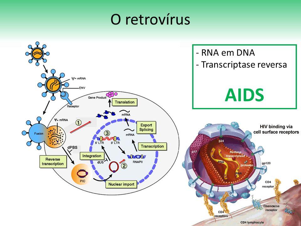 O retrovírus - RNA em DNA - Transcriptase reversa AIDS