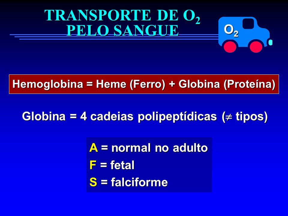 O2O2O2O2 TRANSPORTE DE O 2 PELO SANGUE Hemoglobina = Heme (Ferro) + Globina (Proteína) Globina = 4 cadeias polipeptídicas ( tipos) A = normal no adult