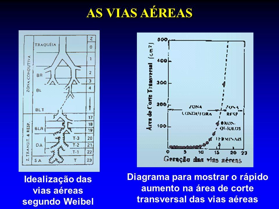 AS VIAS AÉREAS Idealização das vias aéreas segundo Weibel Diagrama para mostrar o rápido aumento na área de corte transversal das vias aéreas