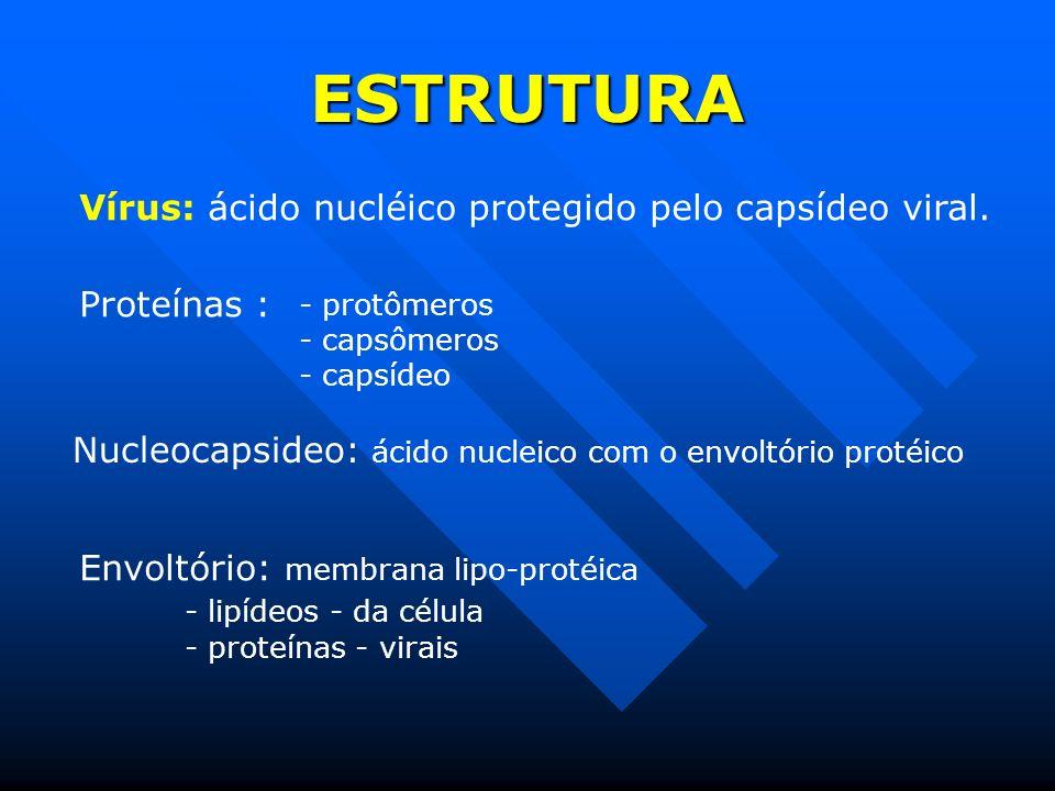 ESTRUTURA Vírus: ácido nucléico protegido pelo capsídeo viral.