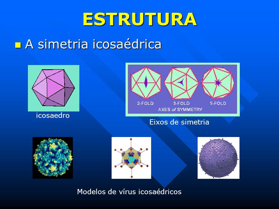 ESTRUTURA A simetria icosaédrica A simetria icosaédrica icosaedro Eixos de simetria Modelos de vírus icosaédricos