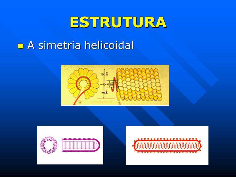 ESTRUTURA A simetria helicoidal A simetria helicoidal