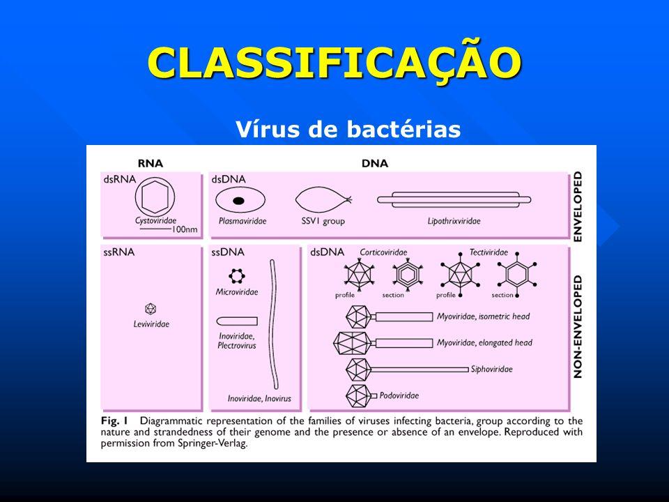 CLASSIFICAÇÃO Vírus de bactérias