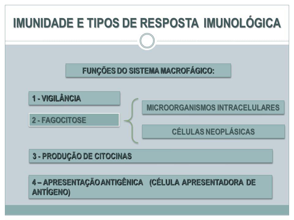 IMUNIDADE E TIPOS DE RESPOSTA IMUNOLÓGICA 2 - FAGOCITOSE 3 - PRODUÇÃO DE CITOCINAS FUNÇÕES DO SISTEMA MACROFÁGICO: CÉLULAS NEOPLÁSICAS MICROORGANISMOS