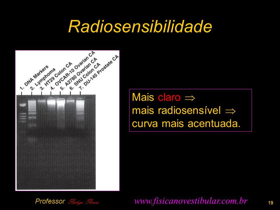 Radiosensibilidade 19 Mais claro mais radiosensível curva mais acentuada.