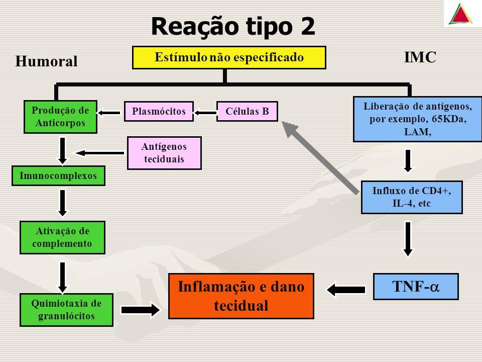 Reação tipo 2 Estímulo não especificado Produção de Anticorpos Imunocomplexos PlasmócitosCélulas B Antígenos teciduais Ativação de complemento Quimiotaxia de granulócitos Inflamação e dano tecidual Liberação de antígenos, por exemplo, 65KDa, LAM, Influxo de CD4+, IL-4, etc TNF- IMC Humoral
