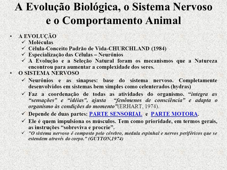 A Evolução Biológica, o Sistema Nervoso e o Comportamento Animal A EVOLUÇÃO Moléculas Célula-Conceito Padrão de Vida-CHURCHLAND (1984) Especialização das Células – Neurônios A Evolução e a Seleção Natural foram os mecanismos que a Natureza encontrou para aumentar a complexidade dos seres.