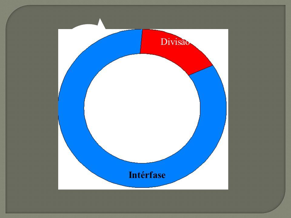 Dividido em: - Interfase - Divisão Celular 1.Mitose 2.Meiose Prof. MSc. Di.Babalu