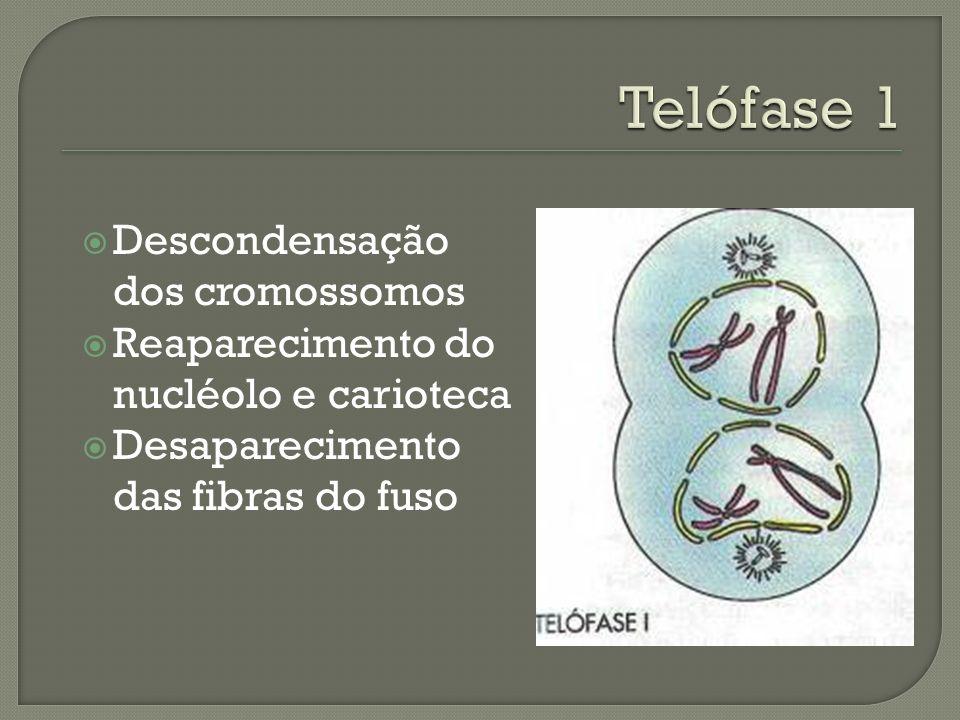 Migração dos cromossomos homólogos para os pólos da célula.