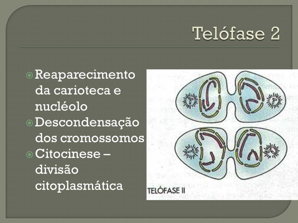Migração das cromátides irmãs para os pólos opostos da célula.