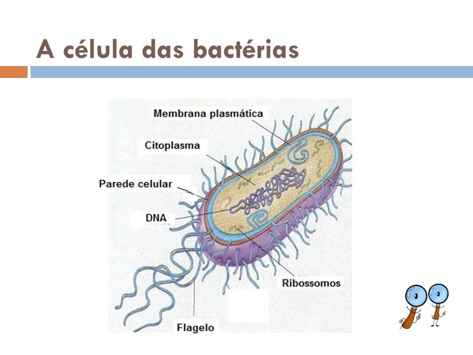 Características São microscópicas Formam colônias de um metro de comprimento Possuem clorofila São azuladas (ciano = azul) ou avermelhadas Encontradas em água doce, salgada em terra úmida Realizam fotossíntese e fixam o nitrogênio do ar.