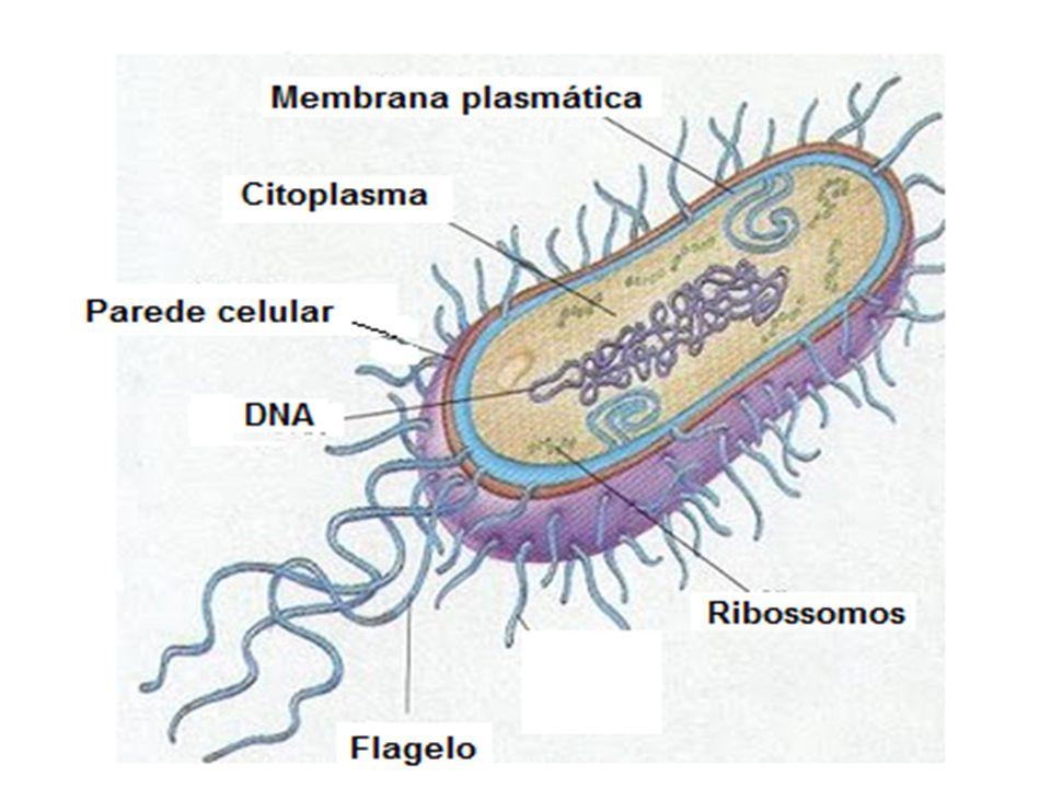 Mutualismo Associação de bactérias com as raízes das leguminosas.