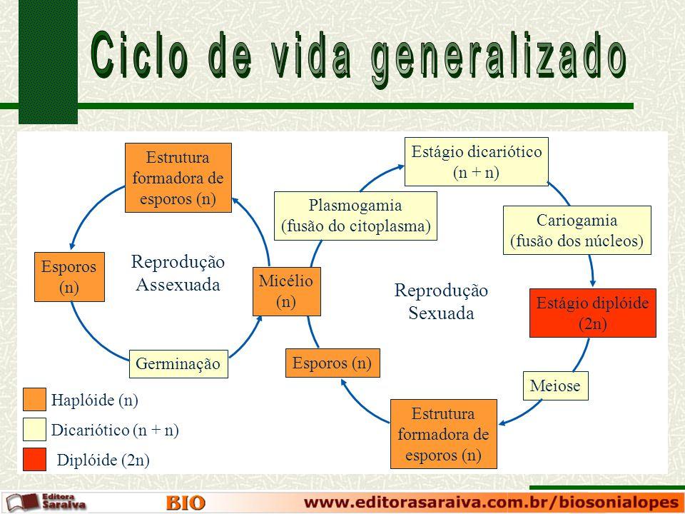 Haplóide (n) Dicariótico (n + n) Diplóide (2n) Estrutura formadora de esporos (n) Esporos (n) Germinação Plasmogamia (fusão do citoplasma) Estágio dic