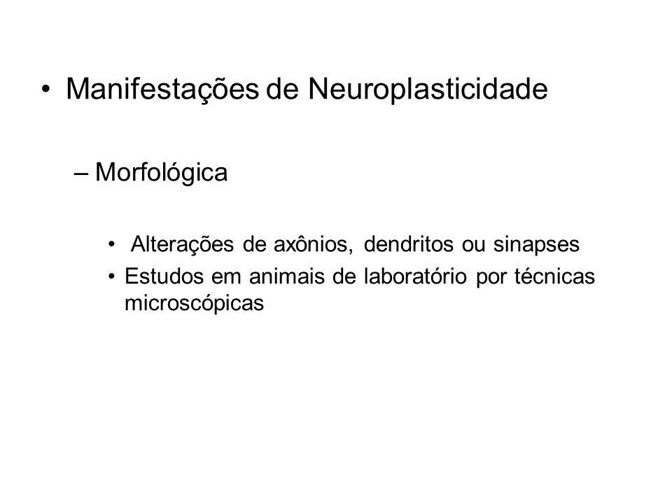 Manifestações de Neuroplasticidade –Morfológica Alterações de axônios, dendritos ou sinapses Estudos em animais de laboratório por técnicas microscópi