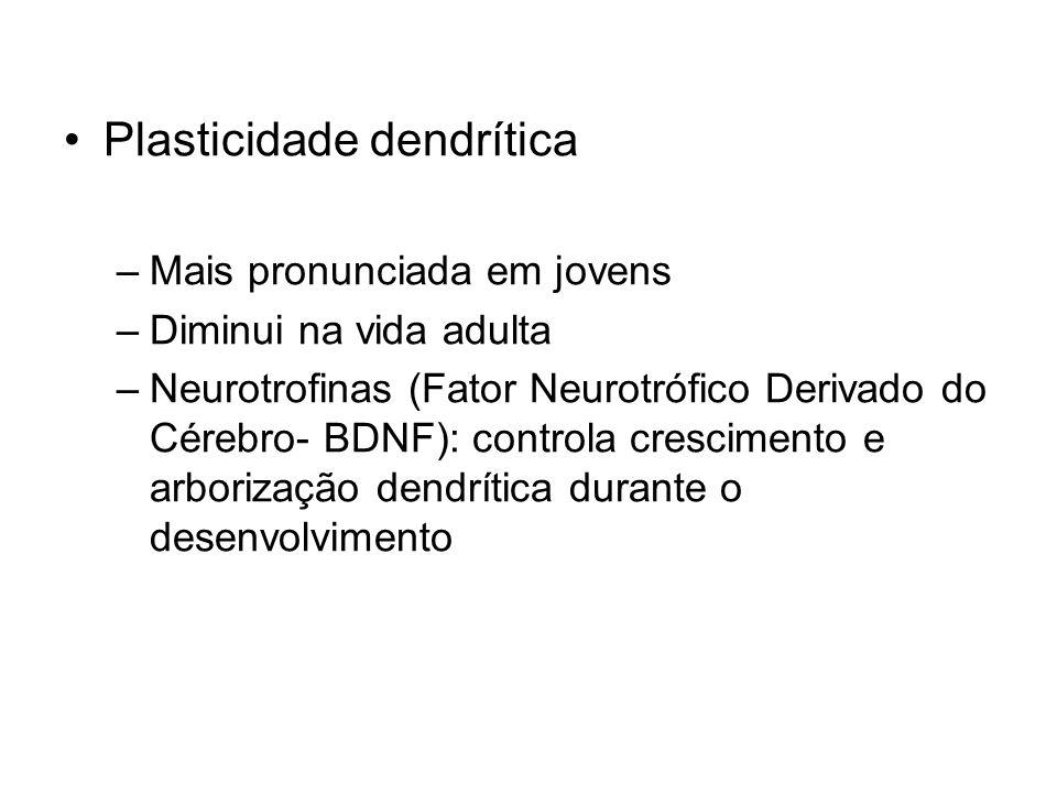 Plasticidade dendrítica –Mais pronunciada em jovens –Diminui na vida adulta –Neurotrofinas (Fator Neurotrófico Derivado do Cérebro- BDNF): controla crescimento e arborização dendrítica durante o desenvolvimento