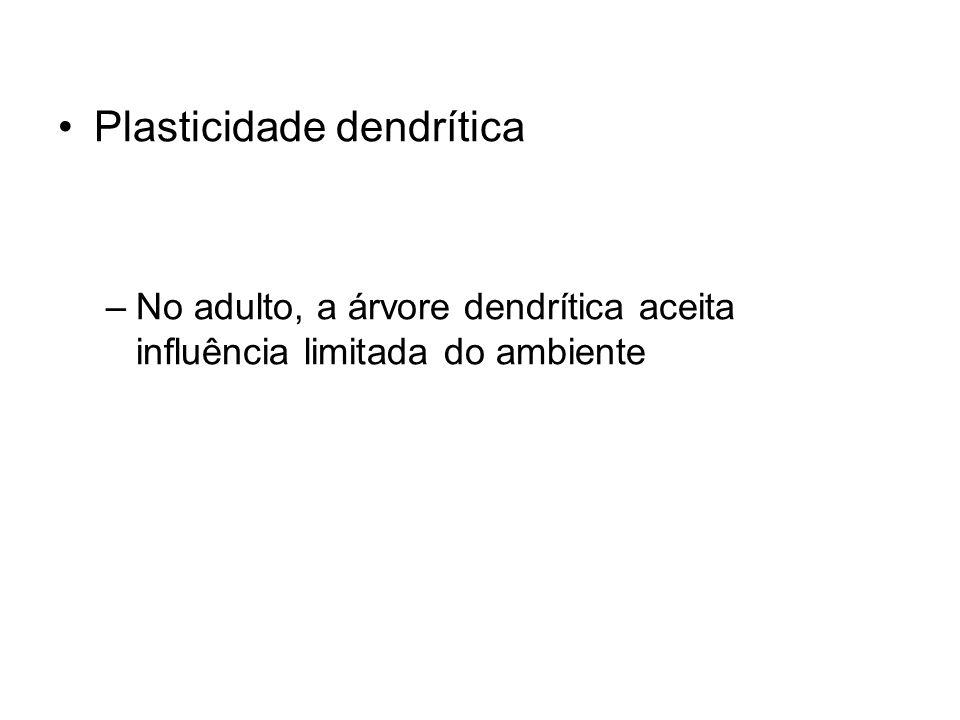Plasticidade dendrítica –No adulto, a árvore dendrítica aceita influência limitada do ambiente