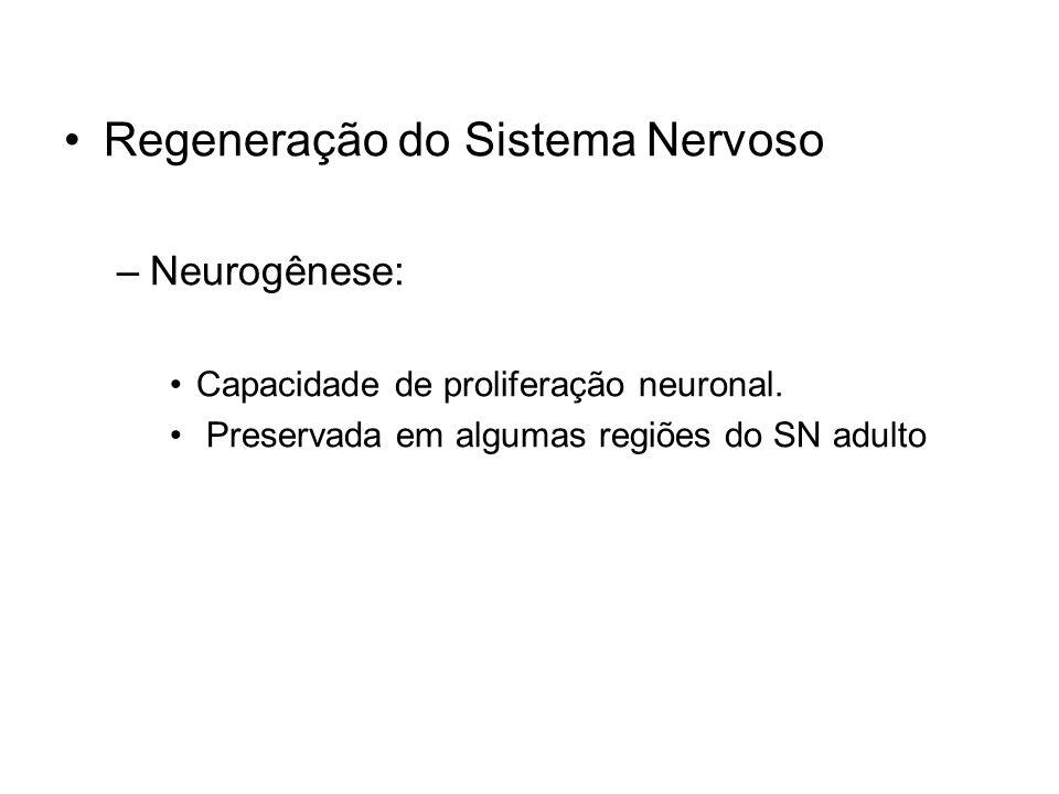 Regeneração do Sistema Nervoso –Neurogênese: Capacidade de proliferação neuronal. Preservada em algumas regiões do SN adulto