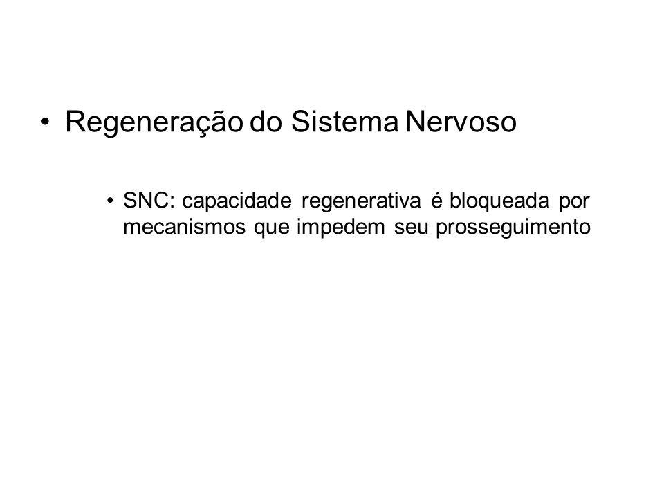 Regeneração do Sistema Nervoso SNC: capacidade regenerativa é bloqueada por mecanismos que impedem seu prosseguimento