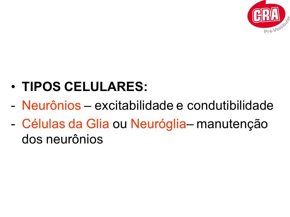 TIPOS CELULARES: -Neurônios – excitabilidade e condutibilidade -Células da Glia ou Neuróglia– manutenção dos neurônios