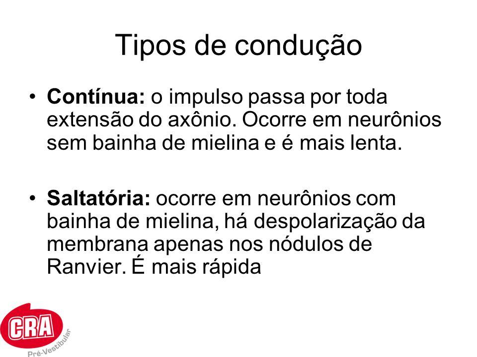 Tipos de condução Contínua: o impulso passa por toda extensão do axônio. Ocorre em neurônios sem bainha de mielina e é mais lenta. Saltatória: ocorre