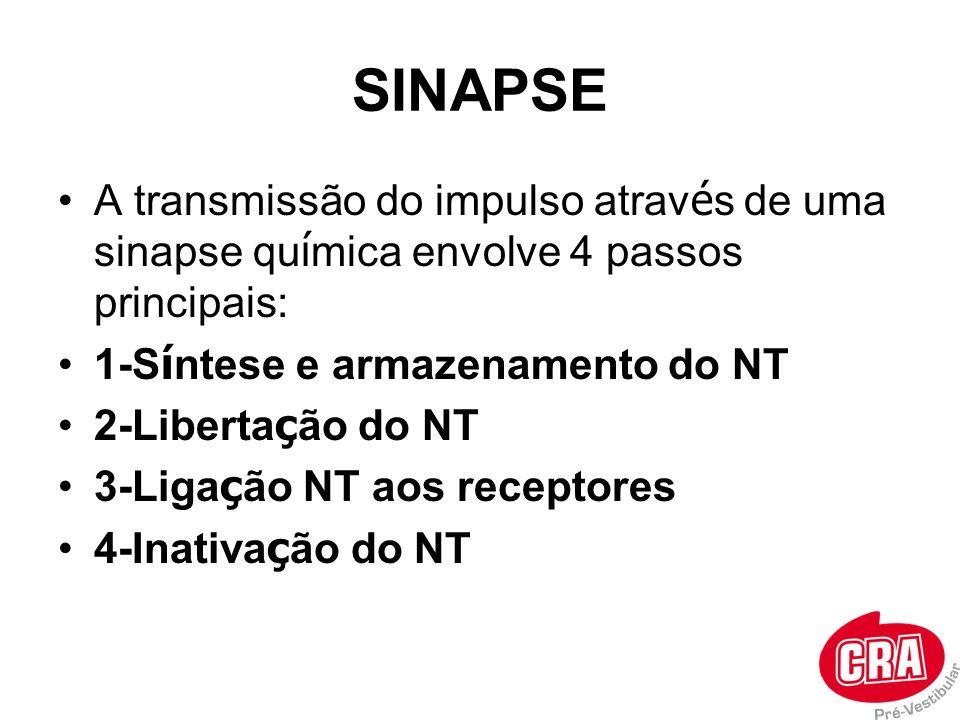 SINAPSE A transmissão do impulso atrav é s de uma sinapse qu í mica envolve 4 passos principais: 1-S í ntese e armazenamento do NT 2-Liberta ç ão do N