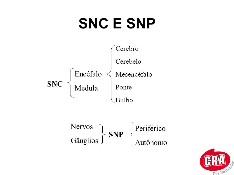 SNC E SNP SNC Encéfalo Medula SNP Nervos Gânglios Periférico Autônomo Cérebro Cerebelo Mesencéfalo Ponte Bulbo