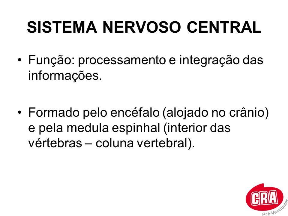 SISTEMA NERVOSO CENTRAL Função: processamento e integração das informações. Formado pelo encéfalo (alojado no crânio) e pela medula espinhal (interior