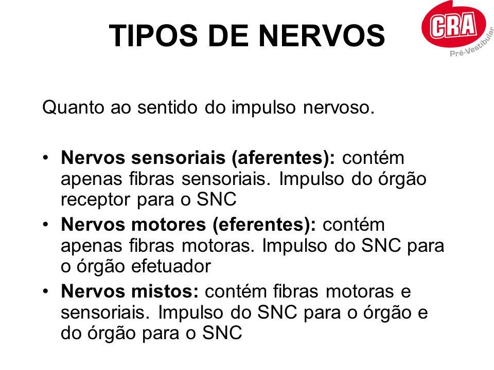 TIPOS DE NERVOS Quanto ao sentido do impulso nervoso. Nervos sensoriais (aferentes): contém apenas fibras sensoriais. Impulso do órgão receptor para o