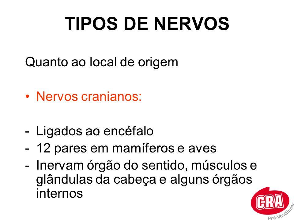 TIPOS DE NERVOS Quanto ao local de origem Nervos cranianos: -Ligados ao encéfalo -12 pares em mamíferos e aves -Inervam órgão do sentido, músculos e g
