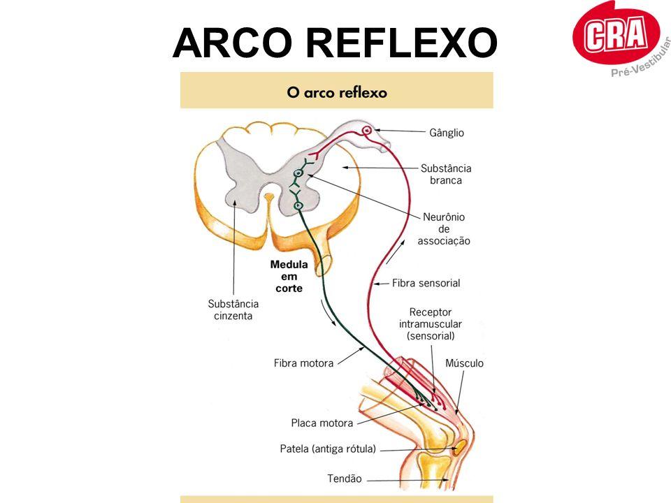 ARCO REFLEXO