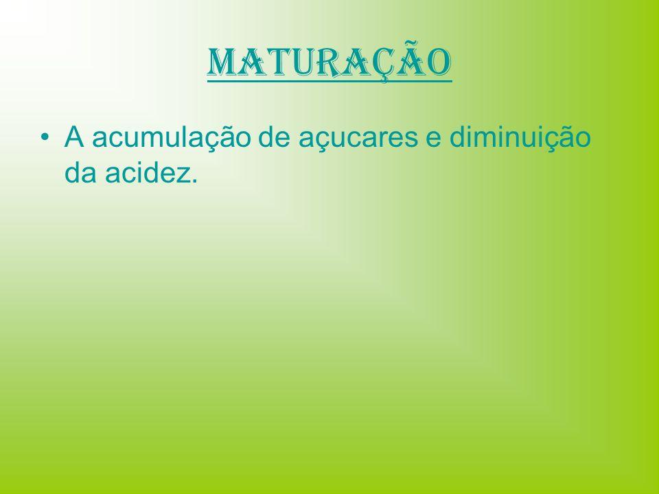 Maturação A acumulação de açucares e diminuição da acidez.
