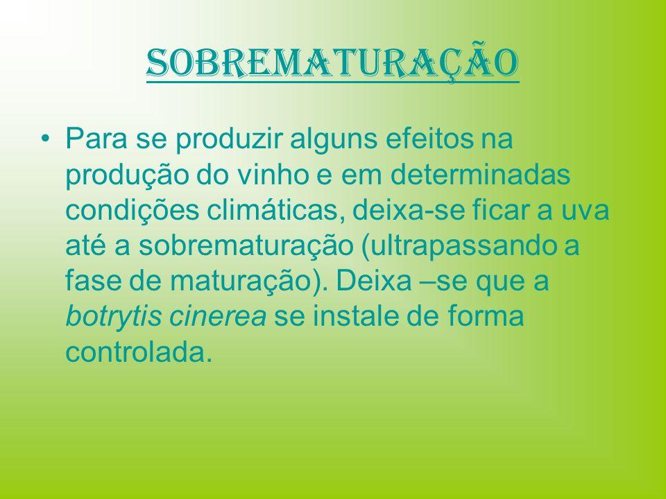 Sobrematuração Para se produzir alguns efeitos na produção do vinho e em determinadas condições climáticas, deixa-se ficar a uva até a sobrematuração