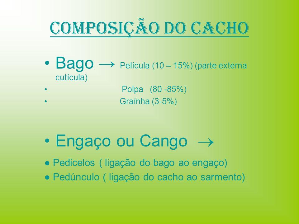 Composição do Cacho Bago Película (10 – 15%) (parte externa cutícula) Polpa (80 -85%) Graínha (3-5%) Engaço ou Cango Pedicelos ( ligação do bago ao en