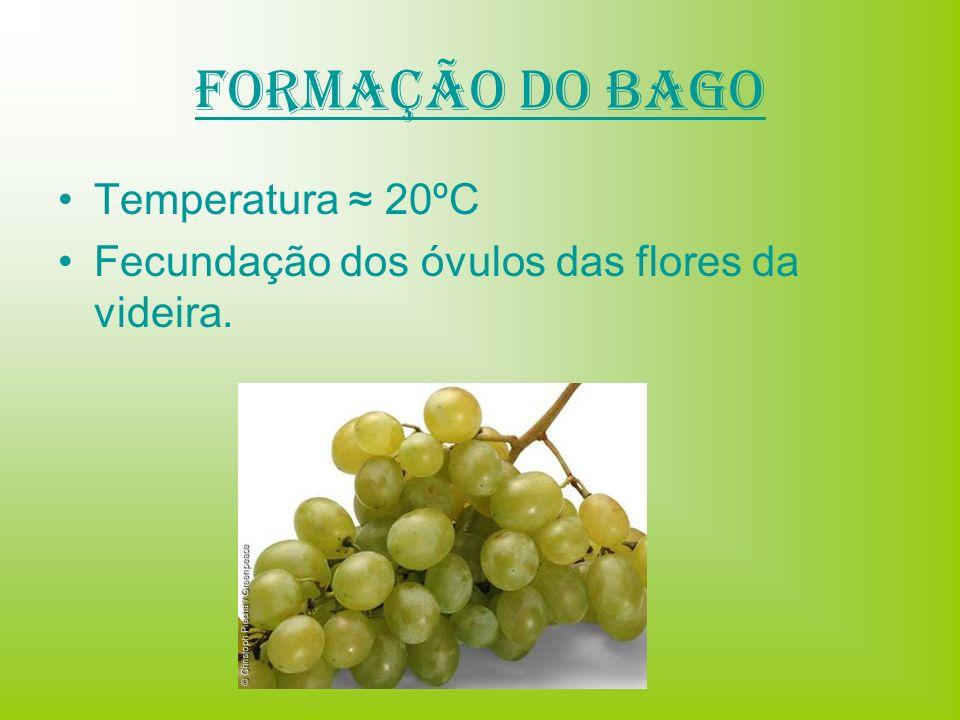 Formação do Bago Temperatura 20ºC Fecundação dos óvulos das flores da videira.
