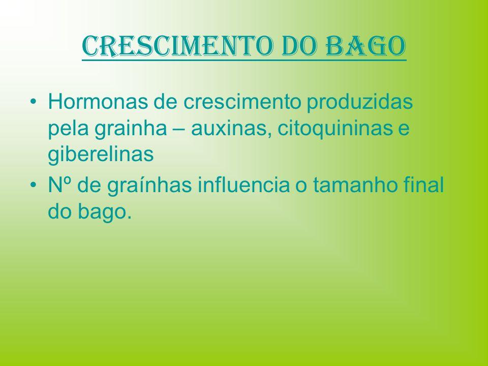 Crescimento do Bago Hormonas de crescimento produzidas pela grainha – auxinas, citoquininas e giberelinas Nº de graínhas influencia o tamanho final do