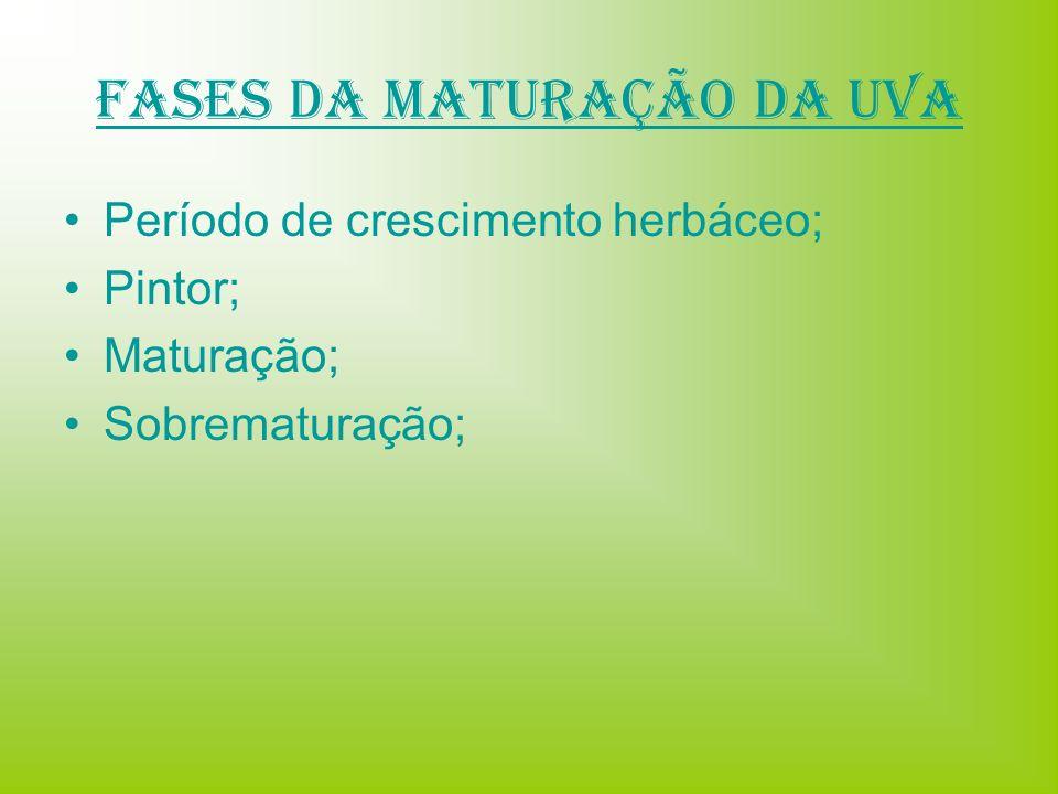 Fases da Maturação da uva Período de crescimento herbáceo; Pintor; Maturação; Sobrematuração;