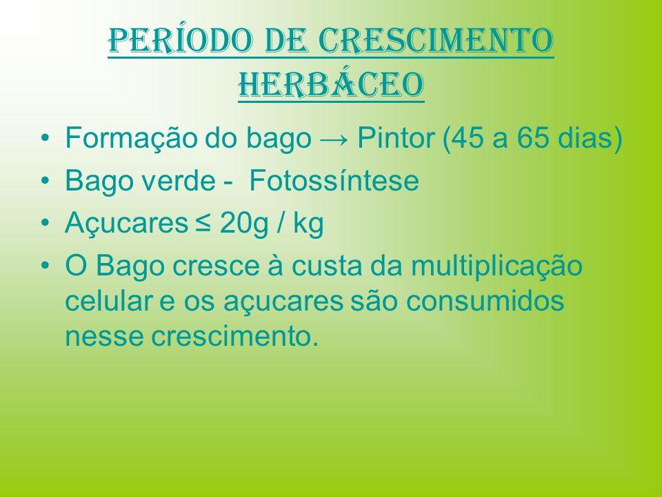 Período de Crescimento Herbáceo Formação do bago Pintor (45 a 65 dias) Bago verde - Fotossíntese Açucares 20g / kg O Bago cresce à custa da multiplica