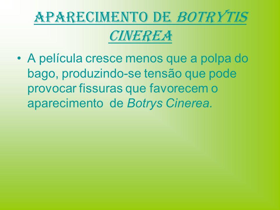 Aparecimento de BOTRYTIS CINEREA A película cresce menos que a polpa do bago, produzindo-se tensão que pode provocar fissuras que favorecem o aparecim