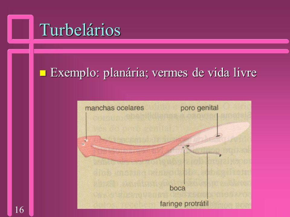 16 Turbelários n Exemplo: planária; vermes de vida livre