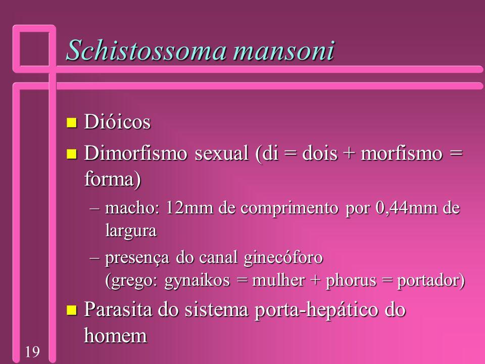 19 Schistossoma mansoni n Dióicos n Dimorfismo sexual (di = dois + morfismo = forma) –macho: 12mm de comprimento por 0,44mm de largura –presença do ca