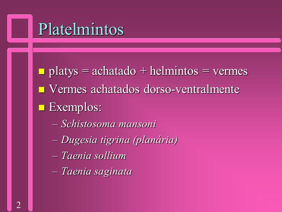 2 Platelmintos n platys = achatado + helmintos = vermes n Vermes achatados dorso-ventralmente n Exemplos: –Schistosoma mansoni –Dugesia tigrina (planá