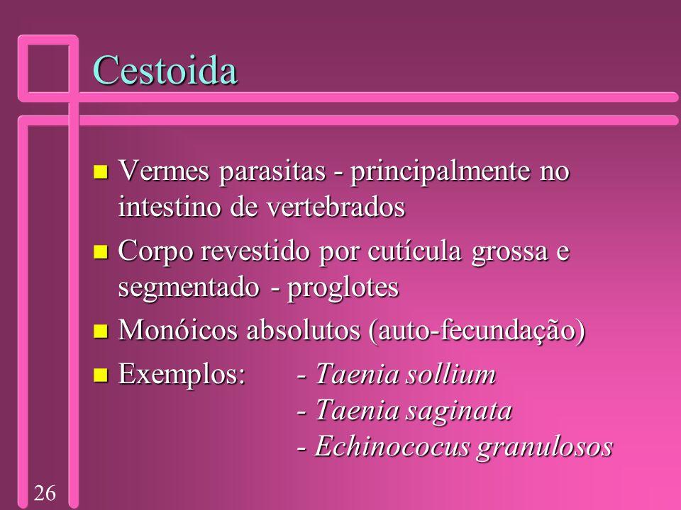 26 Cestoida n Vermes parasitas - principalmente no intestino de vertebrados n Corpo revestido por cutícula grossa e segmentado - proglotes n Monóicos