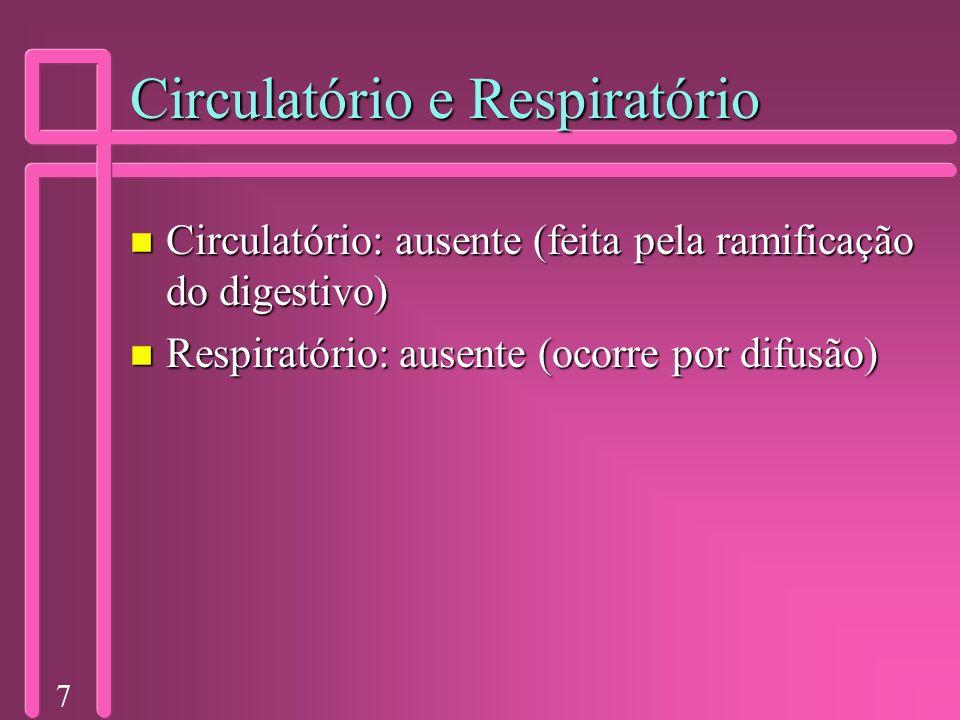 7 Circulatório e Respiratório n Circulatório: ausente (feita pela ramificação do digestivo) n Respiratório: ausente (ocorre por difusão)