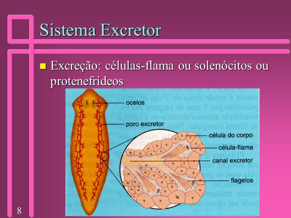 8 Sistema Excretor n Excreção: células-flama ou solenócitos ou protenefrídeos
