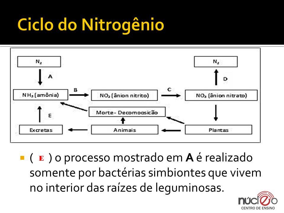 ( ) o processo mostrado em A é realizado somente por bactérias simbiontes que vivem no interior das raízes de leguminosas. E
