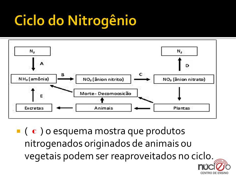 ( ) o esquema mostra que produtos nitrogenados originados de animais ou vegetais podem ser reaproveitados no ciclo. C