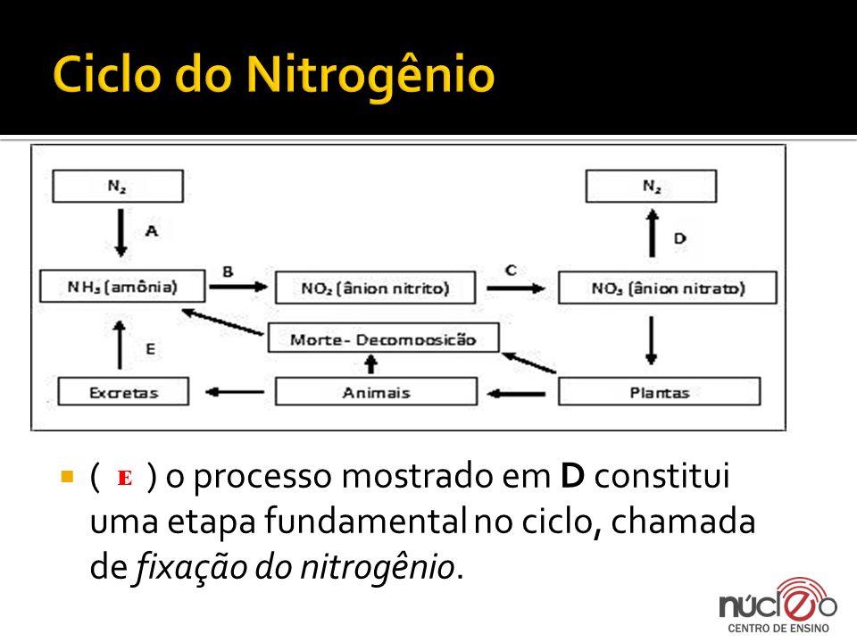 ( ) o processo mostrado em D constitui uma etapa fundamental no ciclo, chamada de fixação do nitrogênio. E